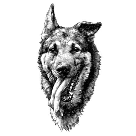 the head of the dog breed shepherd dog with his tongue hanging out, sketch vector graphics monochrome illustration on white background Иллюстрация