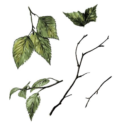set of birch branches and leaves, sketch vector graphics color illustration on a white background Иллюстрация