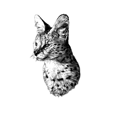 spotted cat breed Serval head looks away, sketch vector graphics monochrome illustration on a white background