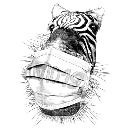 Zebra face nose and mouth close-up looking at the camera strong perspective with a medical mask against the virus, sketch vector graphics monochrome illustration on a white background