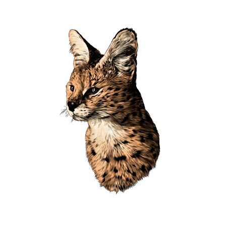 spotted cat breed Serval head looks away, sketch vector graphics color illustration on a white background