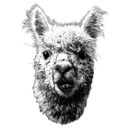 llama or Alpaca head funny expression of the muzzle with raised ears and displaced jaw and malocclusion, sketch vector graphics monochrome illustration on a white background
