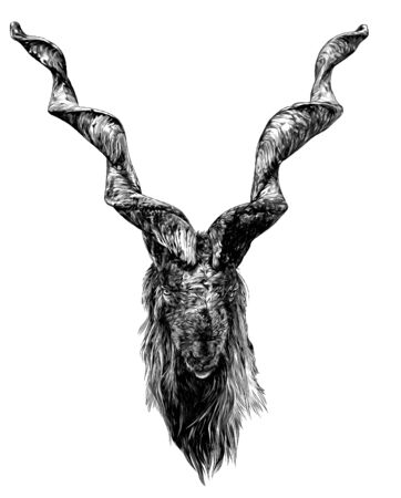 the head of a goat with large screw horns and thick hair looks straight full-face, sketch vector graphics monochrome illustration on a white background