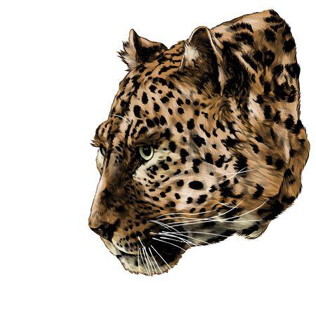 Jaguar head in profile looks away, sketch vector graphics color illustration on a white background Illustration