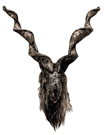 the head of a goat with large screw horns and thick hair looks straight full face, sketch vector graphics color illustration on a white background