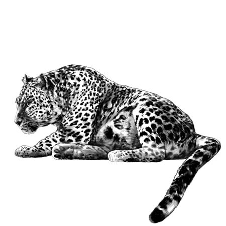 the Jaguar is lying full length with its tail down and looking towards the profile, sketch vector graphics monochrome illustration on a white background