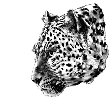 Jaguar head in profile looks away, sketch vector graphics monochrome illustration on a white background