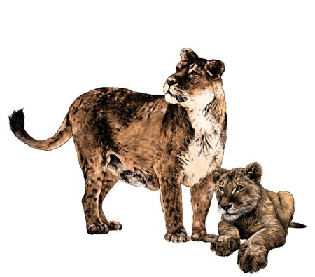 mother tigress stands at full height and looks to the side next to the baby tiger, sketch vector graphics color drawing on a white background Illustration