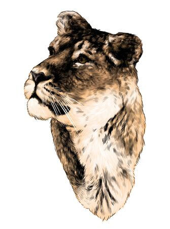the tiger head looks in the direction of three quarters, sketch vector graphics color illustration on white background