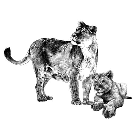 mother tigress stands at full height and looks to the side next to the baby tiger, sketch vector graphics monochrome drawing on a white background