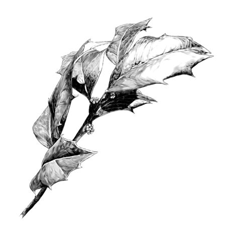 twig with sharp leaves, sketch vector graphics monochrome illustration on a white background