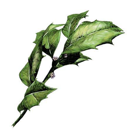 twig with sharp leaves, sketch vector graphics color illustration on a white background