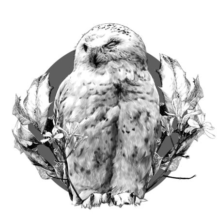 polar owl sitting with closed eyes round composition decorated with branches with leaves and flowers, sketch graphics monochrome illustration on a white background Ilustração