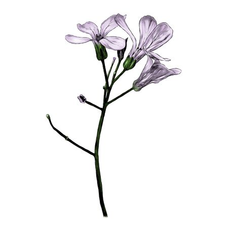 twig with three purple flowers, sketch vector graphics color illustration on a white background