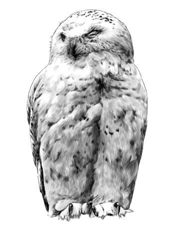 polar owl sitting with closed eyes, sketch vector graphics monochrome illustration on a white background