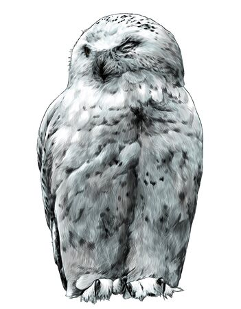 polar owl sitting with closed eyes, sketch vector graphics color illustration on a white background Ilustração