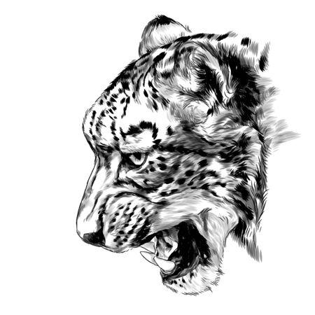 Jaguar snout snarl in profile, sketch vector graphics monochrome illustration on a white background