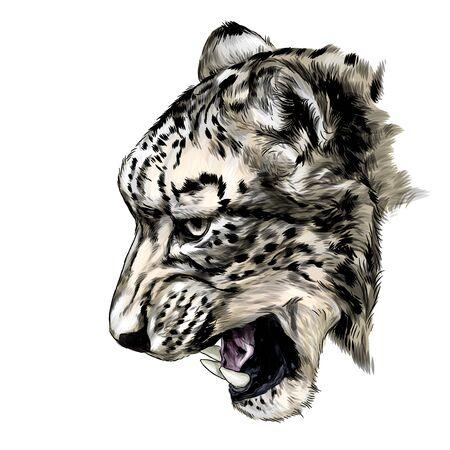 Jaguar snout snarl in profile, sketch vector graphics color illustration on white background