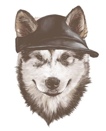 dog purebred Alaskan Malamute puppy head close-up in a fashionable cap with slotted ears, sketch vector graphics color illustration on a white background Illustration