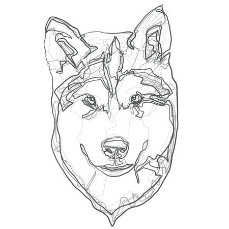the dog is a purebred Alaskan Malamute puppy head closeup, stylized illustration of a single line Illustration