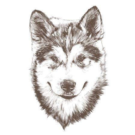 dog purebred Alaskan Malamute puppy head close-up, sketch vector graphics monochrome illustration on white background