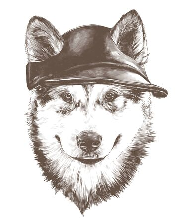 dog purebred Alaskan Malamute puppy head close-up in a fashionable cap with slotted ears, sketch vector graphics monochrome illustration on a white background