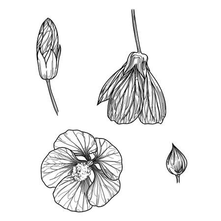 Set of flower buds, sketch vector drawing in graphic style in lines stylized on white background 版權商用圖片 - 158151840