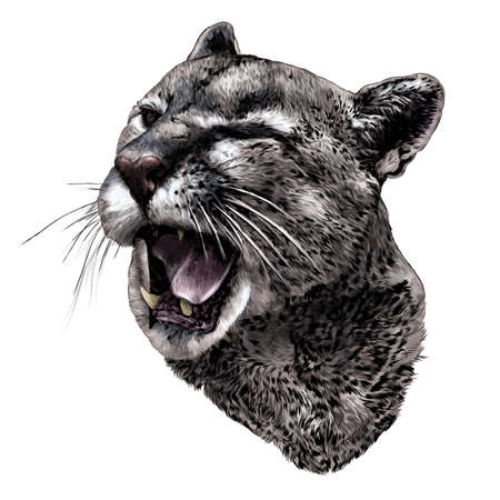 Cougar face with open mouth winks one eye with a malicious smile, sketch drawing in graphic style on white background
