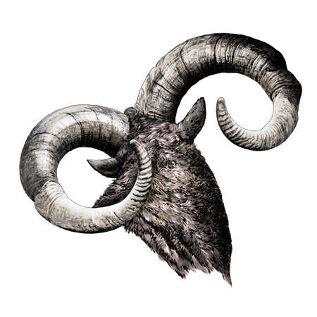 Large goat horns screwed shape from back, sketch vector drawing in graphic style on white background