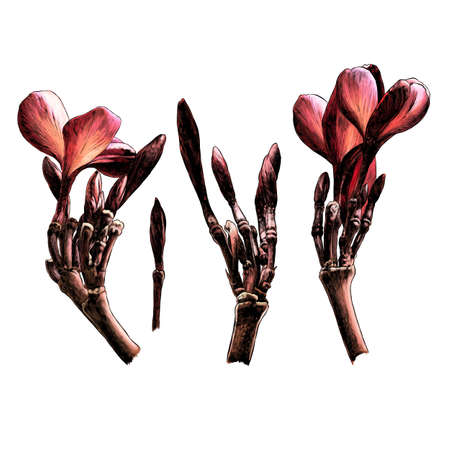 Set of flowers and branches of plumeria several different elements, sketch vector graphics monochrome drawing on a white background Illustration