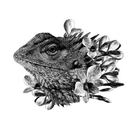 The head of a chameleon in the flowers of orchids and plumeria floral arrangement, sketch vector graphic drawing on white background