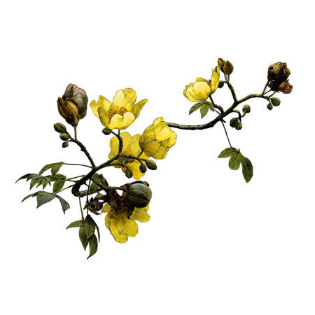 blooming branch of the cochlospermum tree with yellow flower buds and leaves, sketch vector graphics color drawing in lines on a white background
