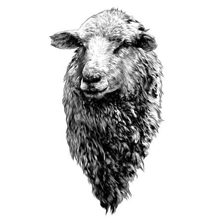 sheep head with thick fur on the chest, sketch vector graphics monochrome drawing in lines on a white background