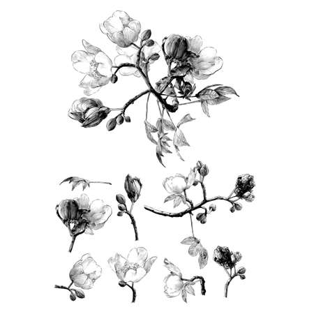 set of different elements of flowering branches of the cochlospermum tree with flower buds and leaves, sketch vector graphics monochrome drawing in lines on a white background