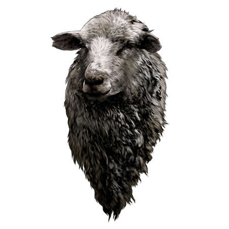sheep head with thick fur on chest, sketch vector graphics color drawing in lines on white background 矢量图像