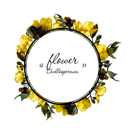 round frame decorated with branches of a flowering cochlospermum tree with yellow flower buds and leaves, sketch vector graphics color drawing in lines on a white background