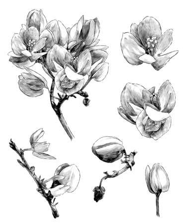 Set of different branches of the flowering Antigonon leptopus
