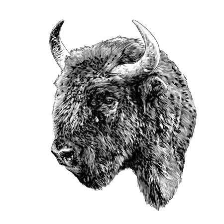 Bison head in profile