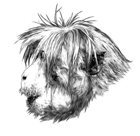 Monkey head in profile with shaggy hairstyle, sketch vector graphics monochrome illustration on a white background Vectores