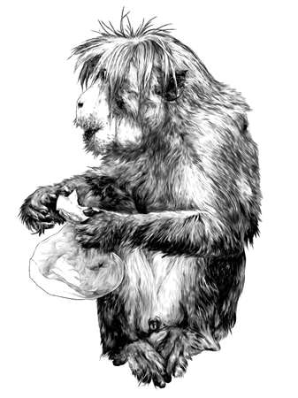 The monkey is sitting full-length with a bag in his paws and looks away, sketch vector graphics monochrome illustration on a white background Vectores