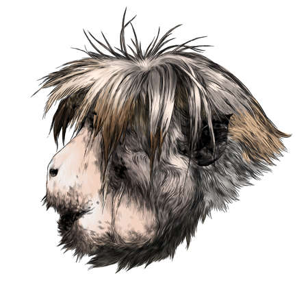 Monkey head in profile with a shaggy hairstyle, sketch vector graphics color illustration on a white background