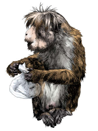 The monkey is sitting full-length with a bag in his paws and looks away, sketch vector graphics color illustration on a white background