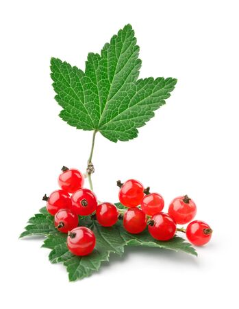 Branch of red currants with leaves isolated on white background photo