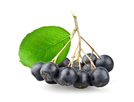 Black aronia with leaf isolated on white background Stock Photo