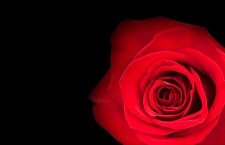 Brillante capullo de rosa roja sobre fondo negro