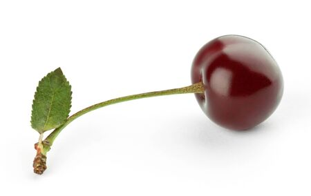 Cherry on white background photo