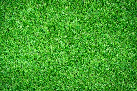 land plant: Green grass background texture Stock Photo