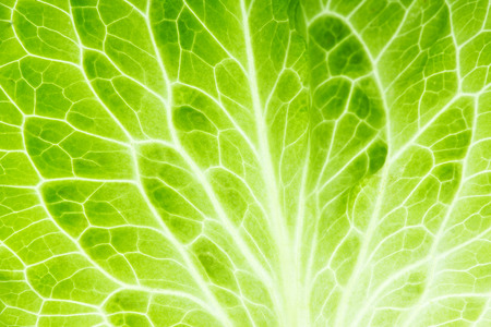 Fresh lettuce leaf closeup. Food background