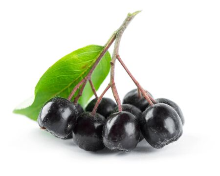 fresh leaf: Fresh ripe chokeberry with leaf on white background Stock Photo