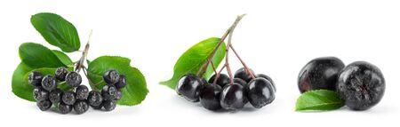 Fresh ripe chokeberry with leaf on white background Archivio Fotografico